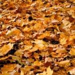 tree leaf removal