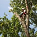 tree climber career